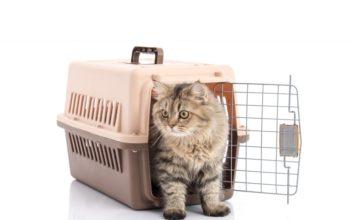transportar gatos