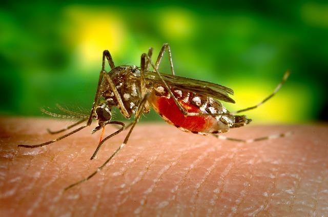 campanha de vacinação mosquito da febre amarela