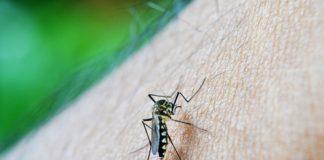 olha o mosquito febre amarela