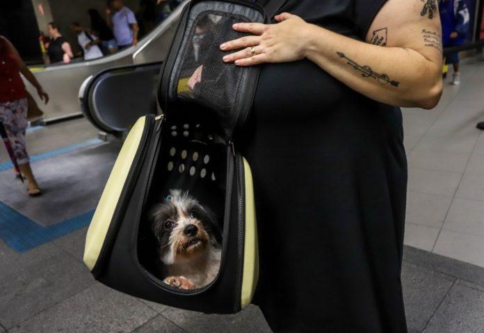transporte de animais sp