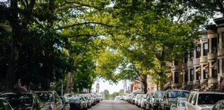 Importância da arborização urbana