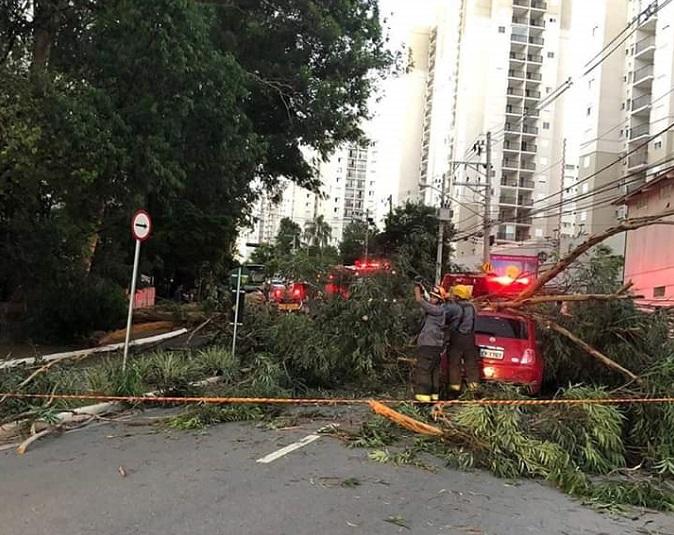 Árvore na Avenida Raimundo Pereira de Magalhães