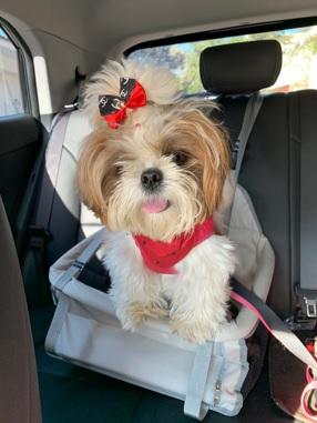 Cachorro no Carro
